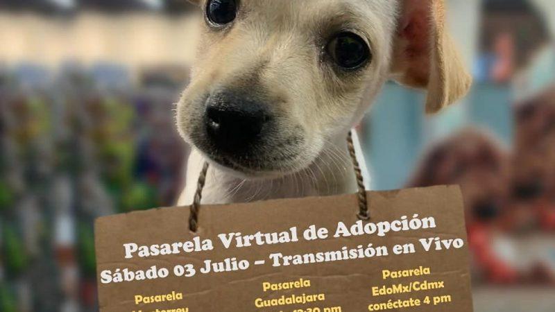 Hemos expandido la pasarela virtual para Guadalajara y Monterrey.